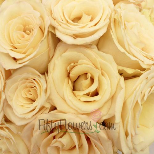 Timeless Cream Rose