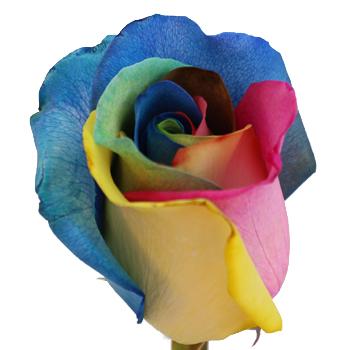Tie Dye Rainbow Roses