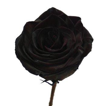 Black Roses Tinted