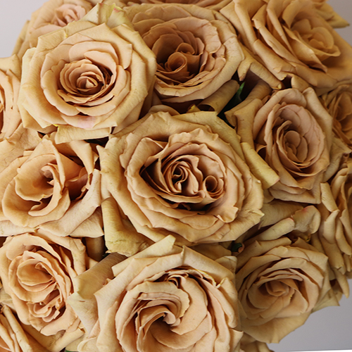 Toffee Rose