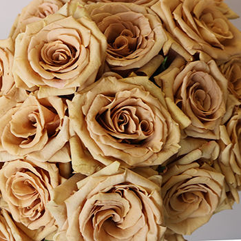 Toffee Brown Roses up close