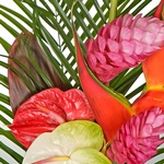 Tropical Flowers Birds of Paradise
