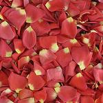 Tropical Wedding Dried Rose Petals