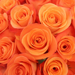 Orange Rose Tropical Amazone