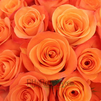 Tropical Amazon Orange Rose