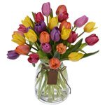 Standard Tulip Passion Pack