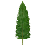 Flat Fern - Buy Bulk FREE SHIPPING!