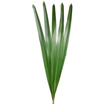 Green Flax Filler