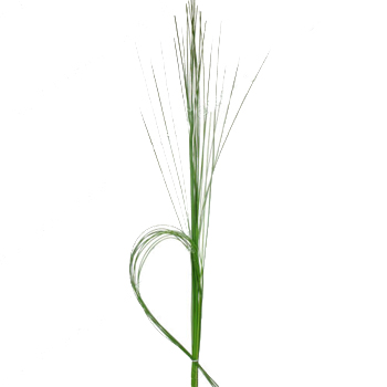 Steel Grass Greenery