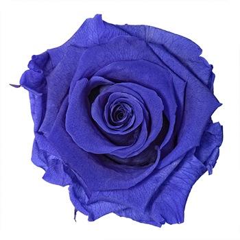 Preserved Violet Vine Rose