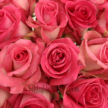 Verdi White and Pink Rose