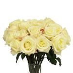 Creamy White Rose Virginia