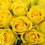 Wedding Rose Viva Yellow