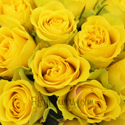Viva Yellow Rose