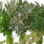 Bulk greens wedding greenery box leather leaf, pittosporum, israeli ruscus, lily grass