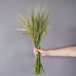 Bulk greenery fresh wheat grass filler flowers sold for delivery