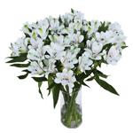 White Peruvian Lilies Buy Bulk