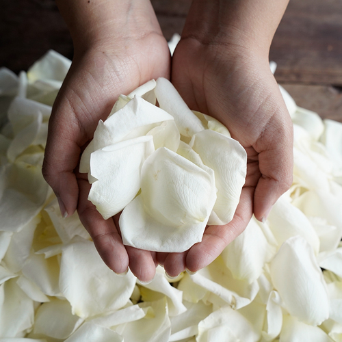 White Dried Rose Petals