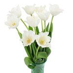 Bulk White French Tulip Flowers