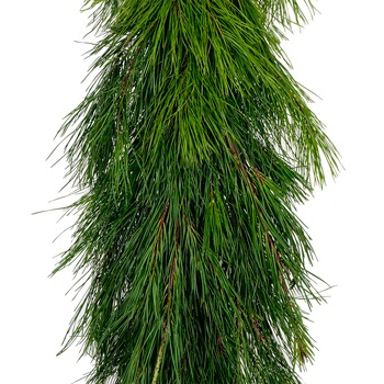White Pine Winter Greens Garland