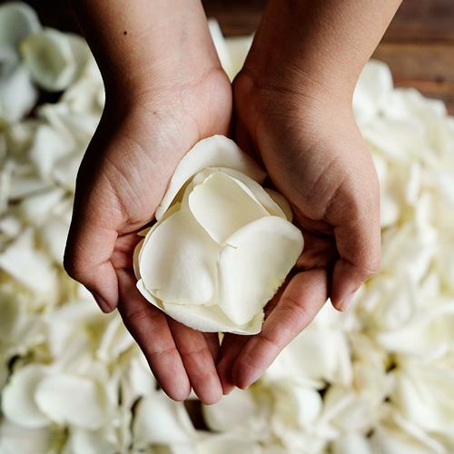 White Rose Petals Wholesale