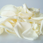White Fresh Rose Petals
