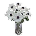 Anemonies White Flower