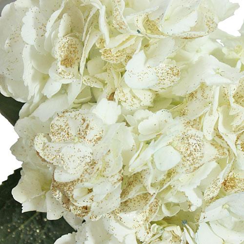 Gold Flecked White Hydrangea
