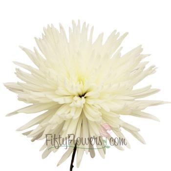 Anastasia Spider White Flowers