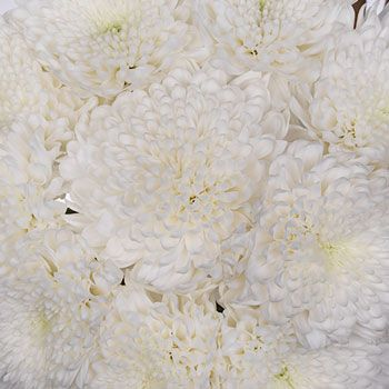 White Dahlia Styled Flowers for Weddings