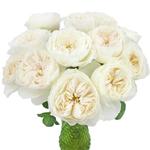 White Cloud Garden Roses