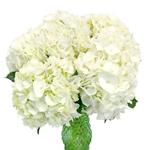 White Hydrangea Flower Centerpiece for weddings