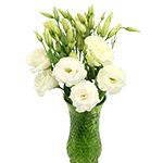 White Lisianthus Flower Wholesale Bunches
