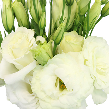 White Lisianthus Flowers