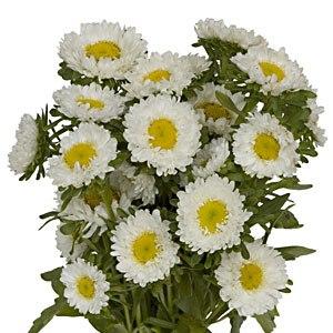 White Matsumoto Flowers
