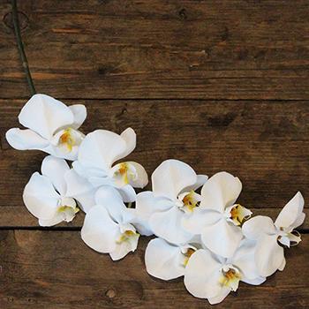 White Phalaenopsis Orchid Flat Lay
