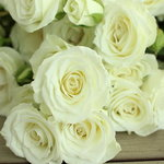 White Spray Rose Viviane Close up