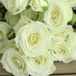 White Spray Rose Viviane Close up