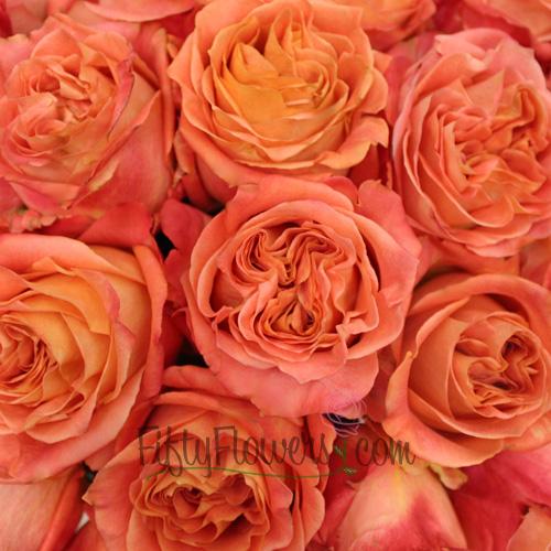 peachy-orange wild spirit garden roses for outdoor weddings