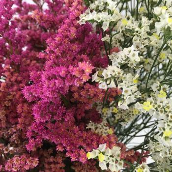 Wispy Filler Flower Combo Box