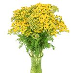 Brain Celosia Bulk Yellow Flowers