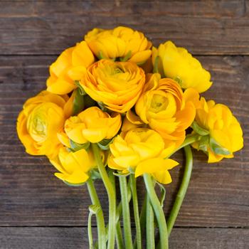 ideas for flower vase fillers with natural green flower.htm white ranunculus fresh cut flower fiftyflowers com  white ranunculus fresh cut flower