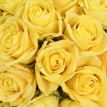 Yellow Meringue Sweetheart Roses