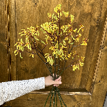 Bulk Kangaroo Paw Yellow Flower