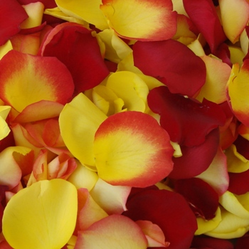 Yellow Red Bicolor Bulk Rose Petals
