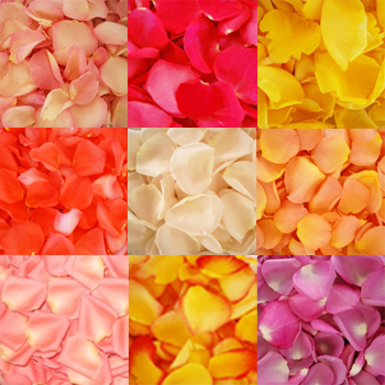 Mixed Fresh Rose Petals