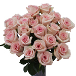 Lady Katherine Light Pink Roses in a Vase