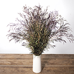 Agonis greenery flowers for delivery