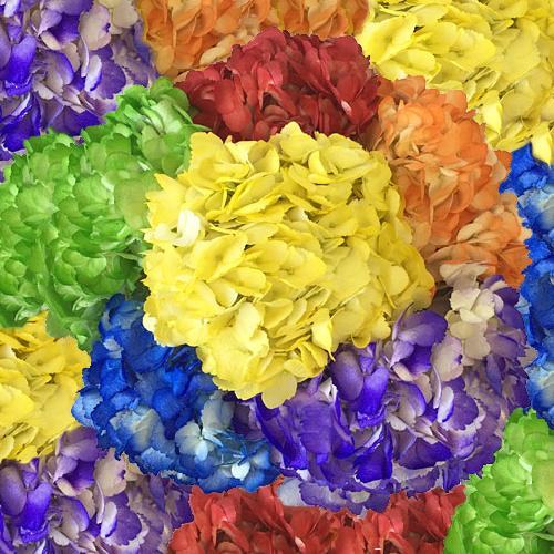 Airbrushed Rainbow Assorted Hydrangeas Up Close
