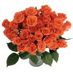 Alegria Dark Orange Spray Wholesale Roses In a vase
